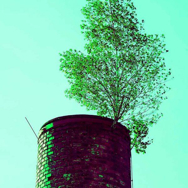 VEGETABLE, albero cresce su una ciminiera © Gustavo Alàbiso